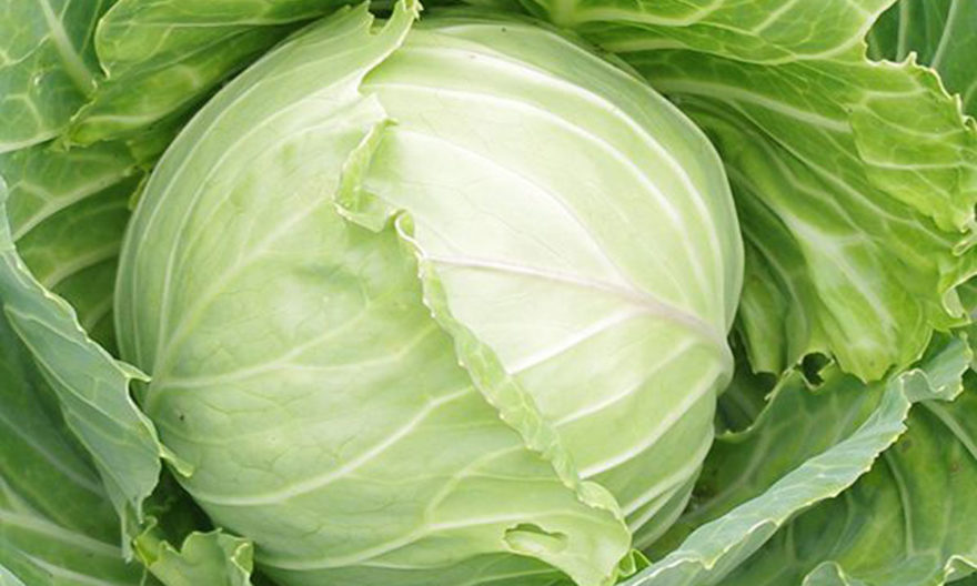 why-to-eat-cabbage-daily